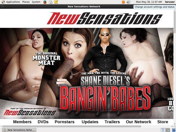 Shanedieselsbanginbabes.com Free Premium Account